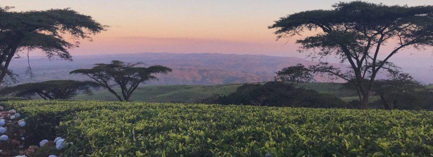 Clima y migración: un campo aún sin explorar