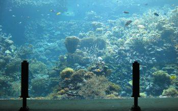 Holanda cría coral 'in vitro' para acuarios de toda Europa