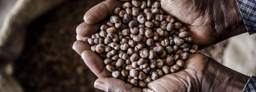 Semillas gratis para fomentar la biodiversidad y la riqueza