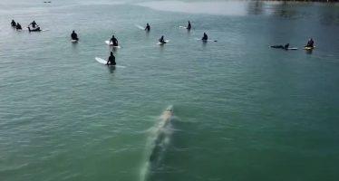 Una ballena sorprende a un grupo de surfistas en una playa de California