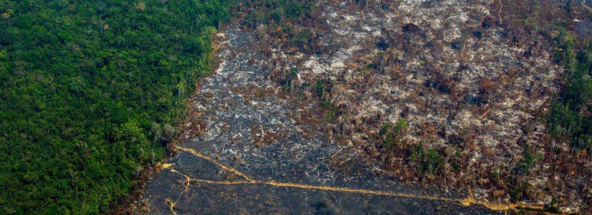 La Amazonia pierde 9.700 kilómetros cuadrados en un año, la mayor deforestación de la década