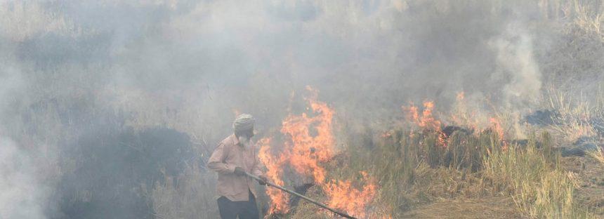 El smog de Delhi se atribuyó a los incendios de cultivos, pero los agricultores dicen que tienen pocas opciones