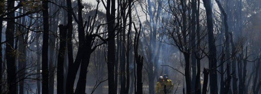 Los gases de efecto invernadero que calientan el clima alcanzan un nuevo máximo, informa la ONU