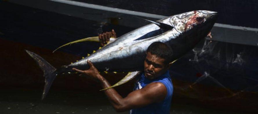 Las naciones pesqueras reducirán los límites de captura de patudo del Atlántico