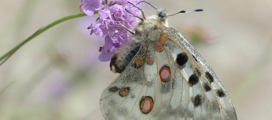 Los márgenes florales aumentan en un 130% las poblaciones de insectos en el entorno agrícola según estudio