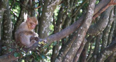 Hay que ayudar a los países con sus objetivos de conservación de la biodiversidad