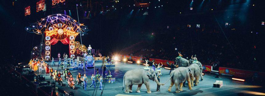 Circos con animales salvajes quedarán prohibidos en París