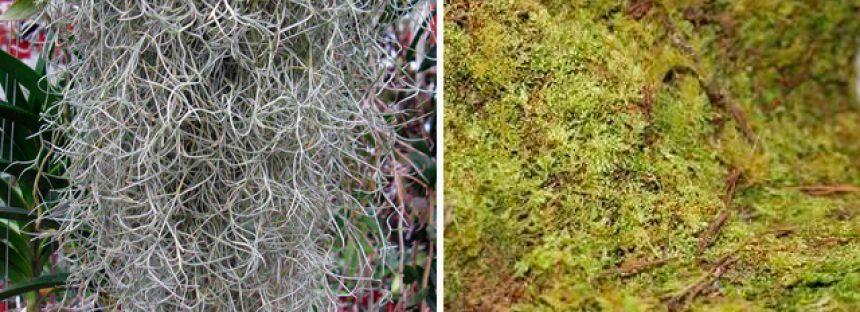 Musgo y heno, vitales para el ecosistema