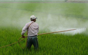 Impulsan procesos agroecológicos ante el uso excesivo de plaguicidas