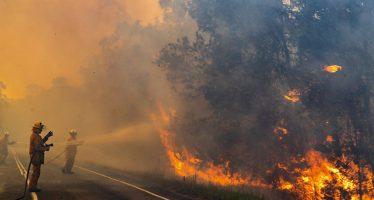 Mueren alrededor de 350 koalas por los incendios en la costa este de Australia