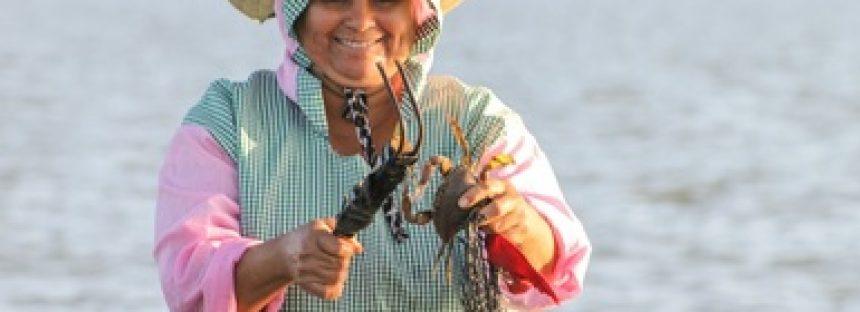 Publica Agricultura proyecto de modificación de NOM para el aprovechamiento de jaiba en el océano Pacífico y el golfo de California