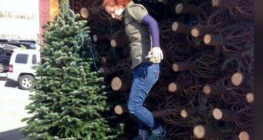Realizan revisión de árboles de navidad introducidos a México