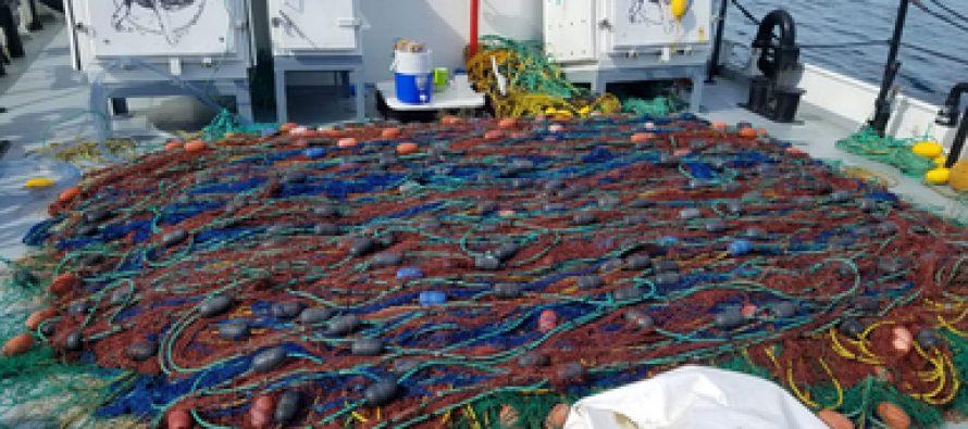 Extraen 13 redes totoaberas durante nuevo operativo en el Alto Golfo de California