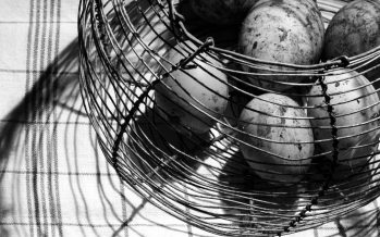 Francia inventa el huevo que no mata a la gallina