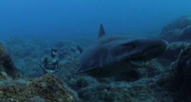 Un paseo sin respirar con tiburones solrayo en El Hierro