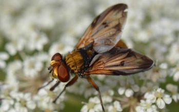 Los insectos están adelantando su vuelo por el cambio climático