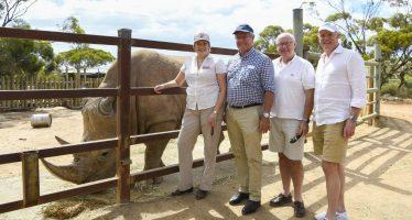 Australia quiere los rinocerontes de Sudáfrica