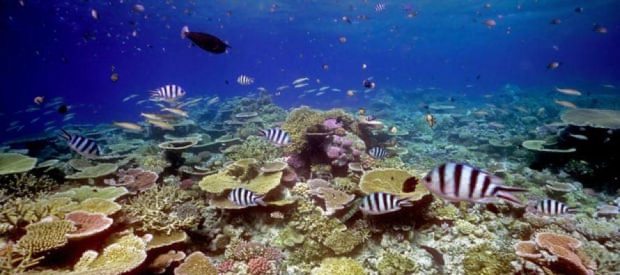 Un estudio halla que los sonidos saludables del coral atraen a los peces a los arrecifes abandonados