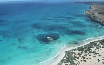 Great Bight australiano: la compañía energética noruega Equinor recibió aprobación ambiental para perforar en busca de petróleo