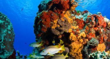 El Parque Nacional Arrecifes de Cozumel comprometido con la conservación del arrecife durante el año 2020