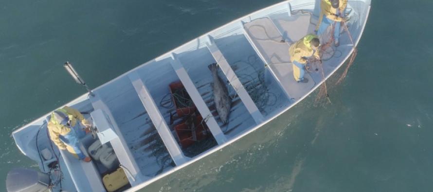 La pesca ilegal desatada como nunca
