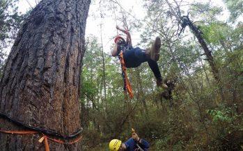 Científicos exigen políticas públicas específicas para proteger el bosque mesófilo de montaña