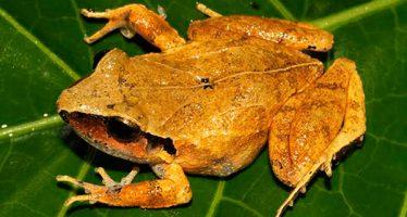 Alarmante situación de anfibios mexicanos: 53 % de las especies está en peligro de extinción