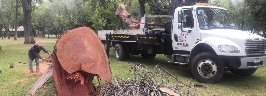Poda ilegal de arbolado forestal y de ornato del Bosque Cuauhtémoc de Morelia
