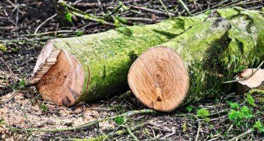 Clausuran predios donde removían vegetación para cambio de uso de suelo de forma ilegal