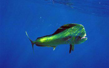 Iniciativa que adiciona el artículo 4° de la Ley General de Pesca y Acuacultura Sustentable, suscrita por el diputado Arturo Escobar y Vega e integrantes de los grupos parlamentarios del PVEM Y de Morena