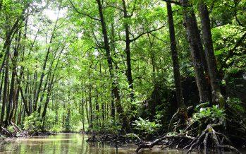 Los manglares, la gran solución contra el cambio climático