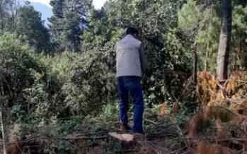 Frenan aprovechamiento forestal ilegal en zona de la Biosfera de la Mariposa Monarca