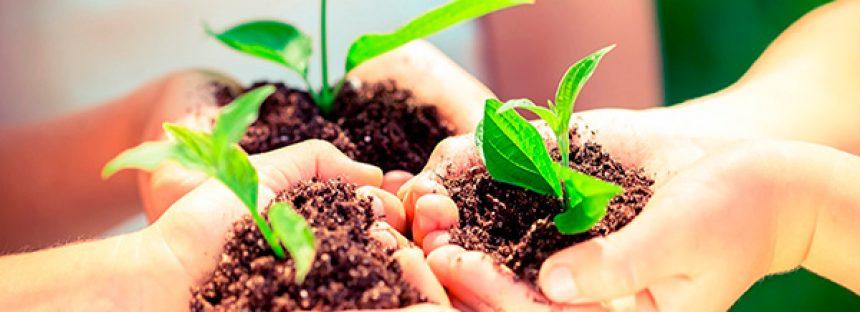 La educación ambiental es útil para crear una mejor ciudadanía