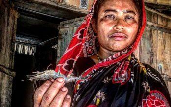 En la primera línea de la emergencia climática, Bangladesh se adapta