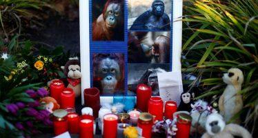 Tres mujeres se entregan por provocar el incendio que mató a decenas de simios en un zoo alemán