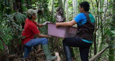 10.000 animales silvestres robados de su hábitat