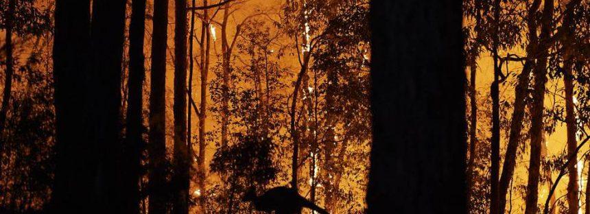 La biodiversidad australiana, en llamas