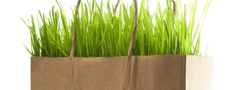 Las bolsas de papel no son más ecológicas que las de plástico