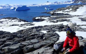 El cambio climático y la actividad humana facilitan la llegada de especies invasoras a la Antártida