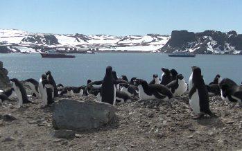 Los pingüinos fomentan la cooperación polar