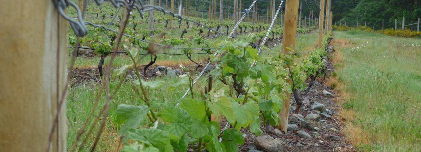 El vino emigra empujado por el calentamiento