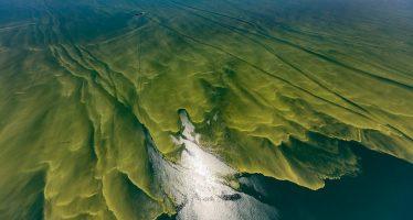 Floraciones de algas letales: un ecosistema desequilibrado