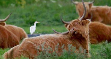 ¿Una cálida bienvenida? Los visitantes de vida silvestre advierten sobre desastres climáticos