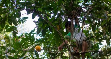 """Cacao no oro: los """"árboles de chocolate"""" ofrecen futuro a las tribus amazónicas"""