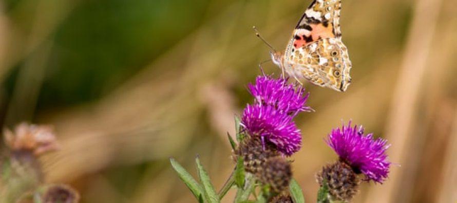 """La nueva """"hoja de ruta para la recuperación"""" urgente podría revertir el apocalipsis de los insectos"""