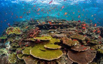 El borrador del plan de la ONU establece el objetivo 2030 para evitar la sexta extinción masiva de la Tierra