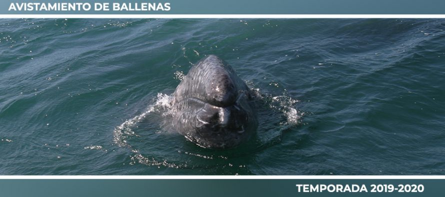 Inspección y vigilancia de las actividades de Observación de Ballenas