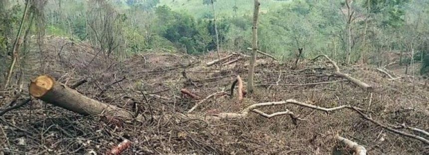 Deforestan sus parcelas… para volver a reforestar
