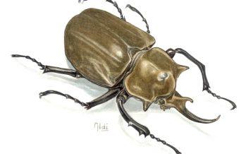 Curso básico de ilustración de organismo pequeños