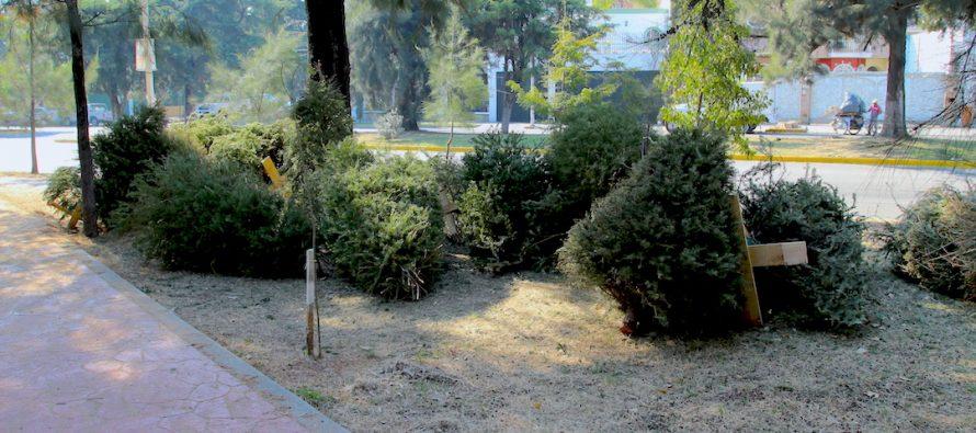 Lleva tu árbol de Navidad al centro de acopio ¡No lo abandones!